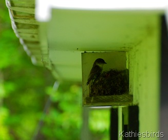 12. EAPH nest-kab