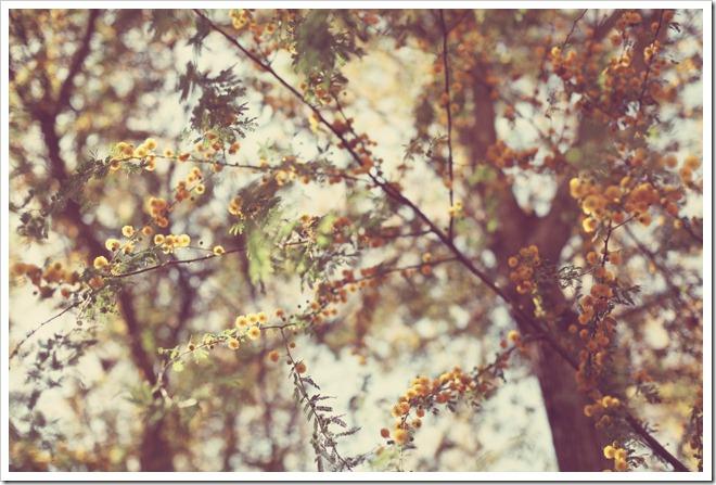 Wildflower Center Apr 2 067-1_edited-1