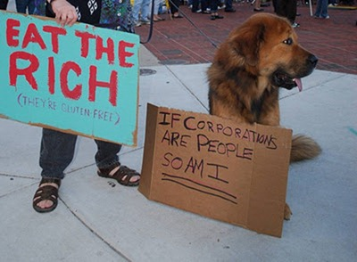 cute-pets-at-occupy-wall-street-07