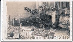Crecenciana Matus Villatoro Reinacher's Front Yard in Brazil