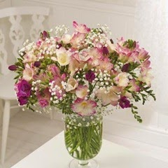 25 Pink Guernsey Freesias by post with free delivery
