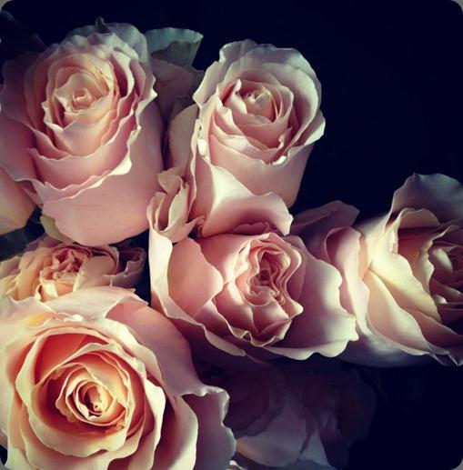 579626_10151296962917625_1195769259_n Peach Campanella garden roses Valley Flower Company