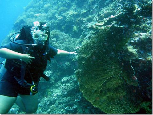 12 11 Bali (915) Menjangan scuba diving e