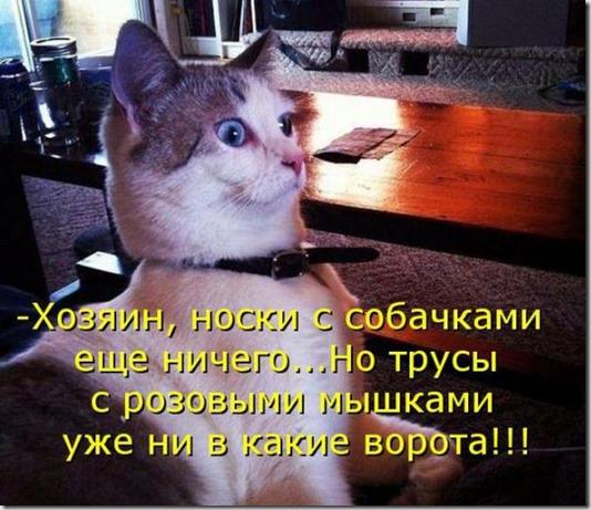 c3c01ee69168c020365b51b36b4_prev