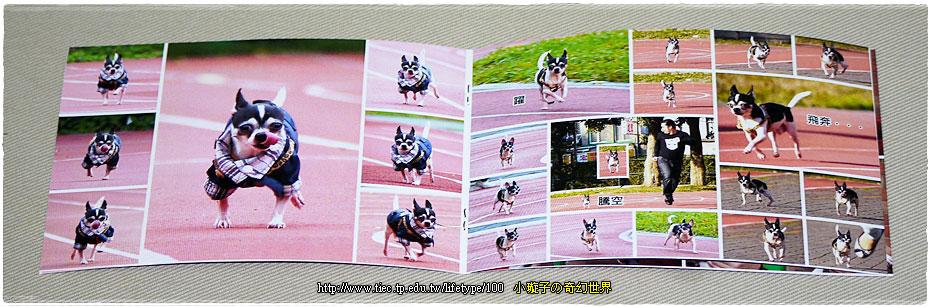 dog-fly10.jpg
