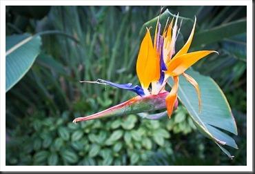2011Dec31-Brookside-Gardens-37