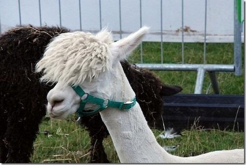 awesome-animal-haircuts2