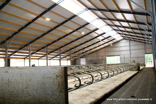 koeien kijken boer martij 18-06-2011 (36).JPG