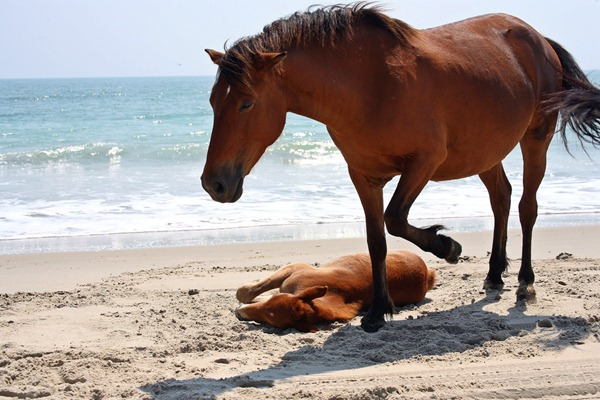 horse in the beach