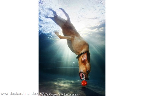 caes subaquaticos desbaratinando  (17)