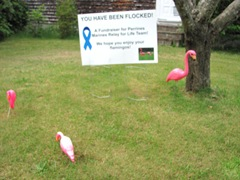 youve been flocked 5