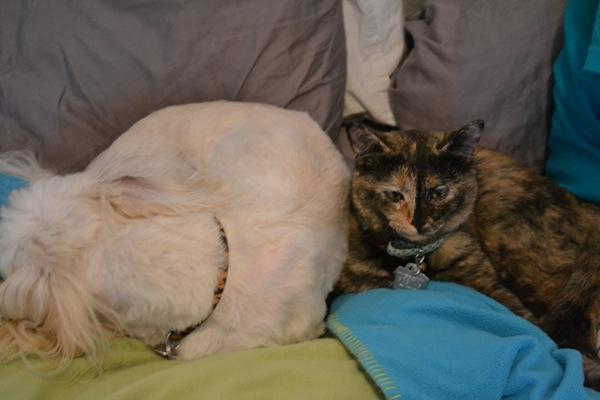 Kip & Stella