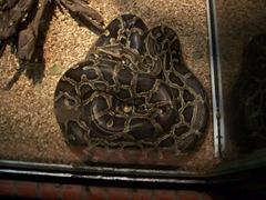 2011.08.07-013 serpent