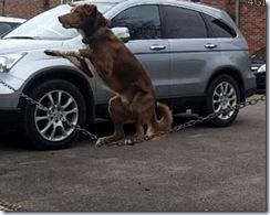 balance_dog