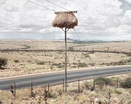 Ninhos postes 06