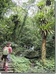 鳥巢蕨妝點出森林的原始自然之美