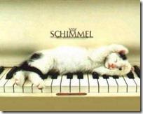 gato pianista blogdeimagenes (13)