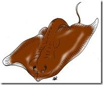 peces clipart blogolorear (4)