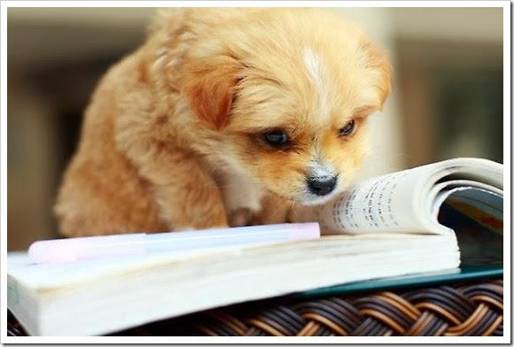 Lectura semana Don dividendo 02_2014