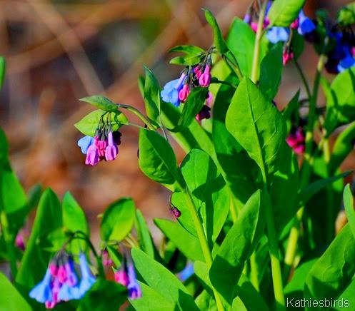 5b. flowers-kab