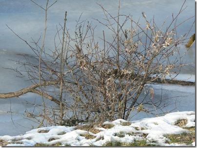 Le Tarn gelé 11-02-2012 14-59-49
