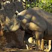 Zoo Atlanta Rhino
