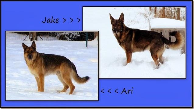 Ari and Jake