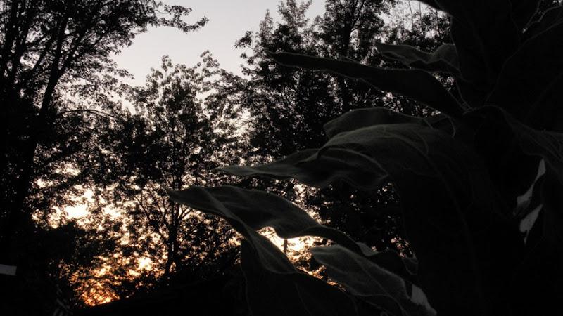 Backyard Sunset (1)sm