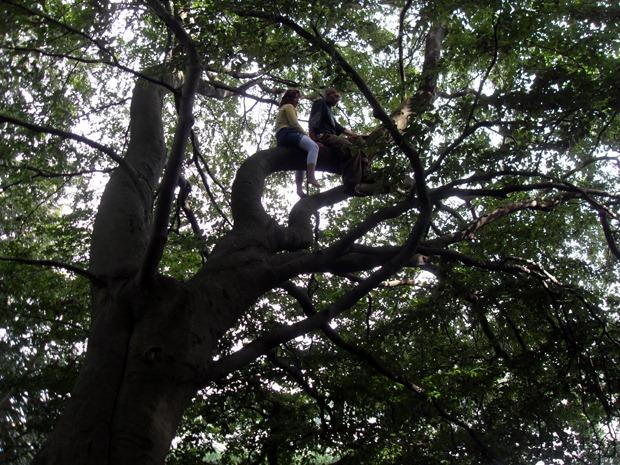 klartretræet