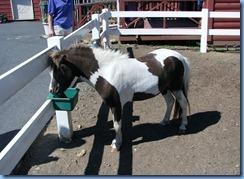 2935 Pennsylvania - Gettysburg, PA - Land of Little Horses