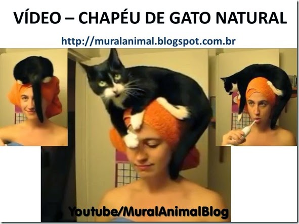 VÍDEO – CHAPÉU DE GATO NATURAL