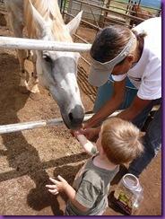 horse rescue 065