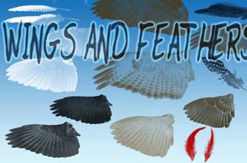 Pinceles de plumas y alas