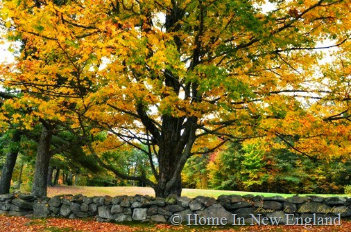 fall tree1
