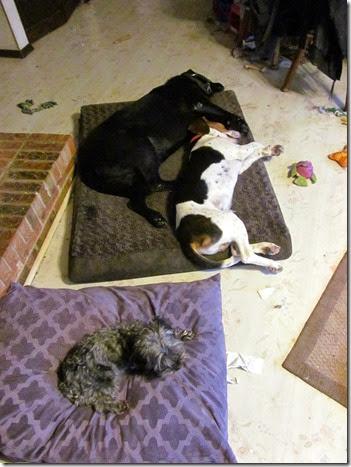 Rigg's,Charlie&Sadie12-27-14a