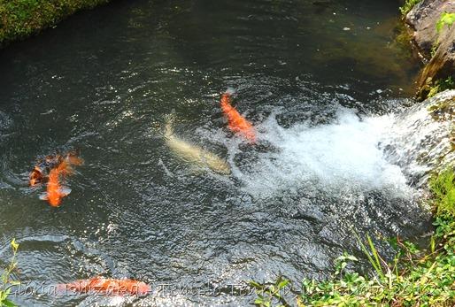44 - Glória Ishizaka - Arashiyama e Sagano - Kyoto - 2012