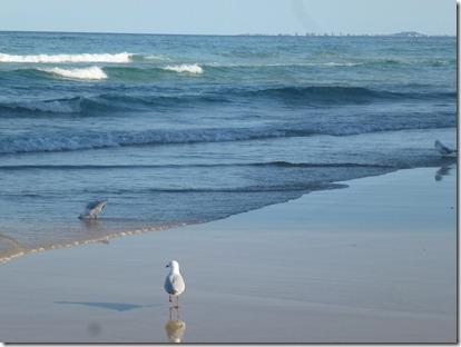December 2012 Gold Coast 026