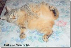 Really ladylike, Bobcat!