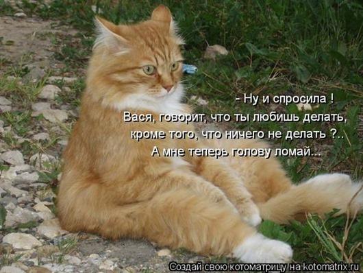 1345799774_kotomatricy-2