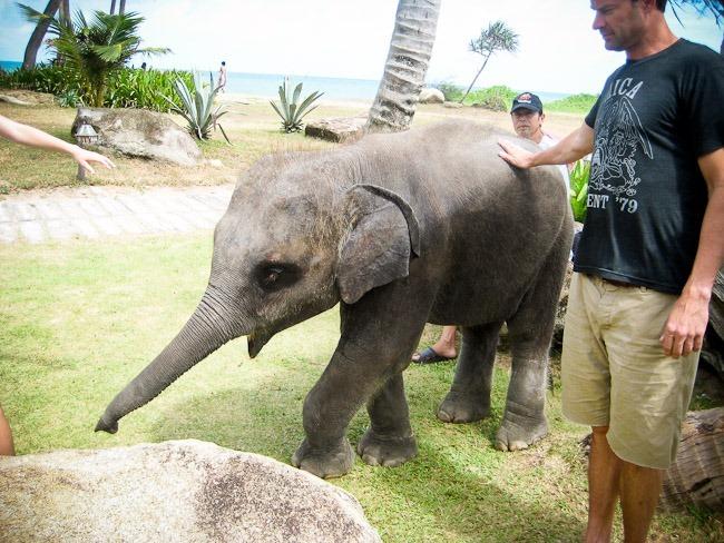 2012-08-01 Phuket 60080