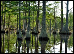 08c - Paddling amongst the Cypress Trees - deeper we go