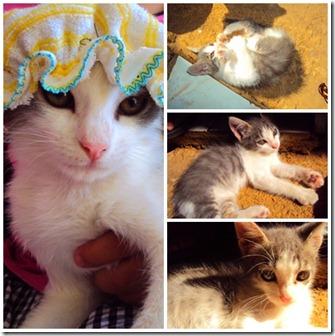 Gatos page