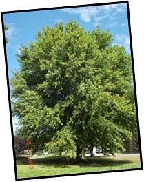 Day 1 Tree