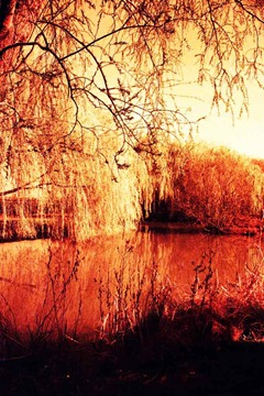 Willow-Lake - XPRO