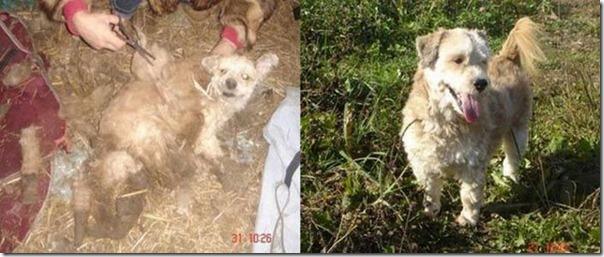 Animais Antes e Depois do Resgate (32)