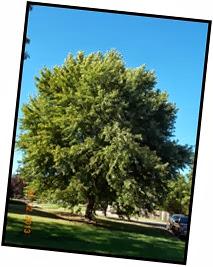 Day 22 Tree (3)