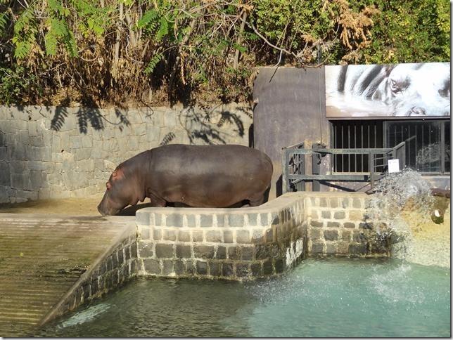 Santiago_Zoo_DSC03634