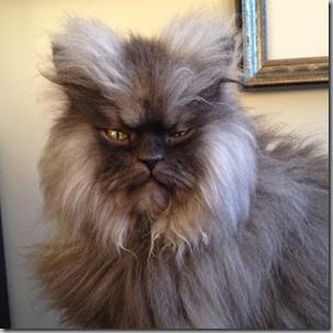 Colonel Meow3