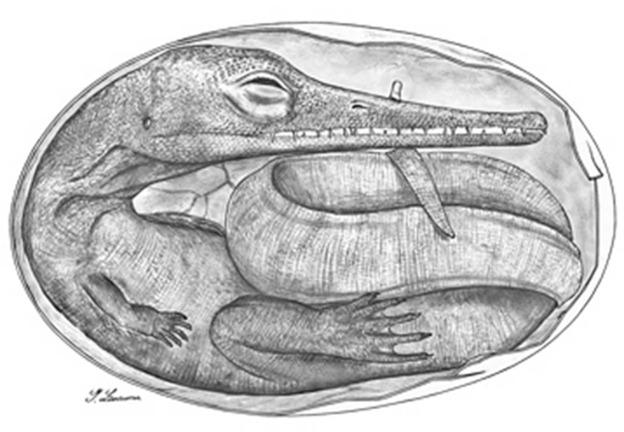 embriones reptiles