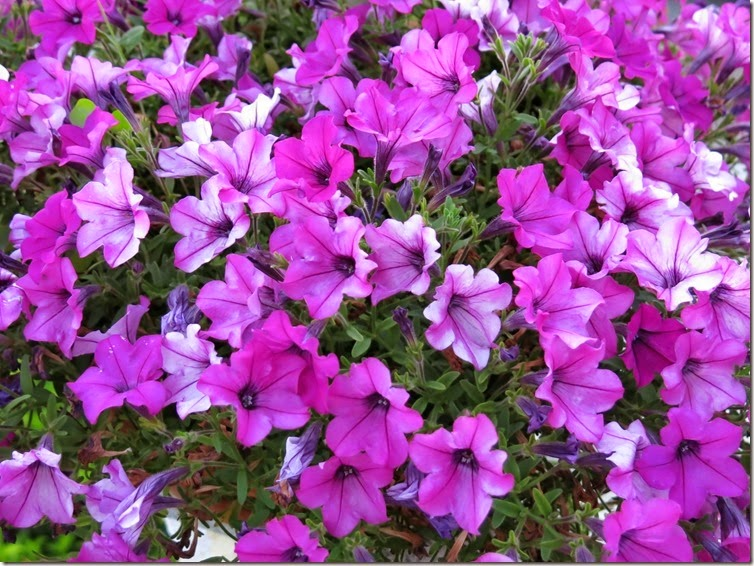 12_Flores da tia